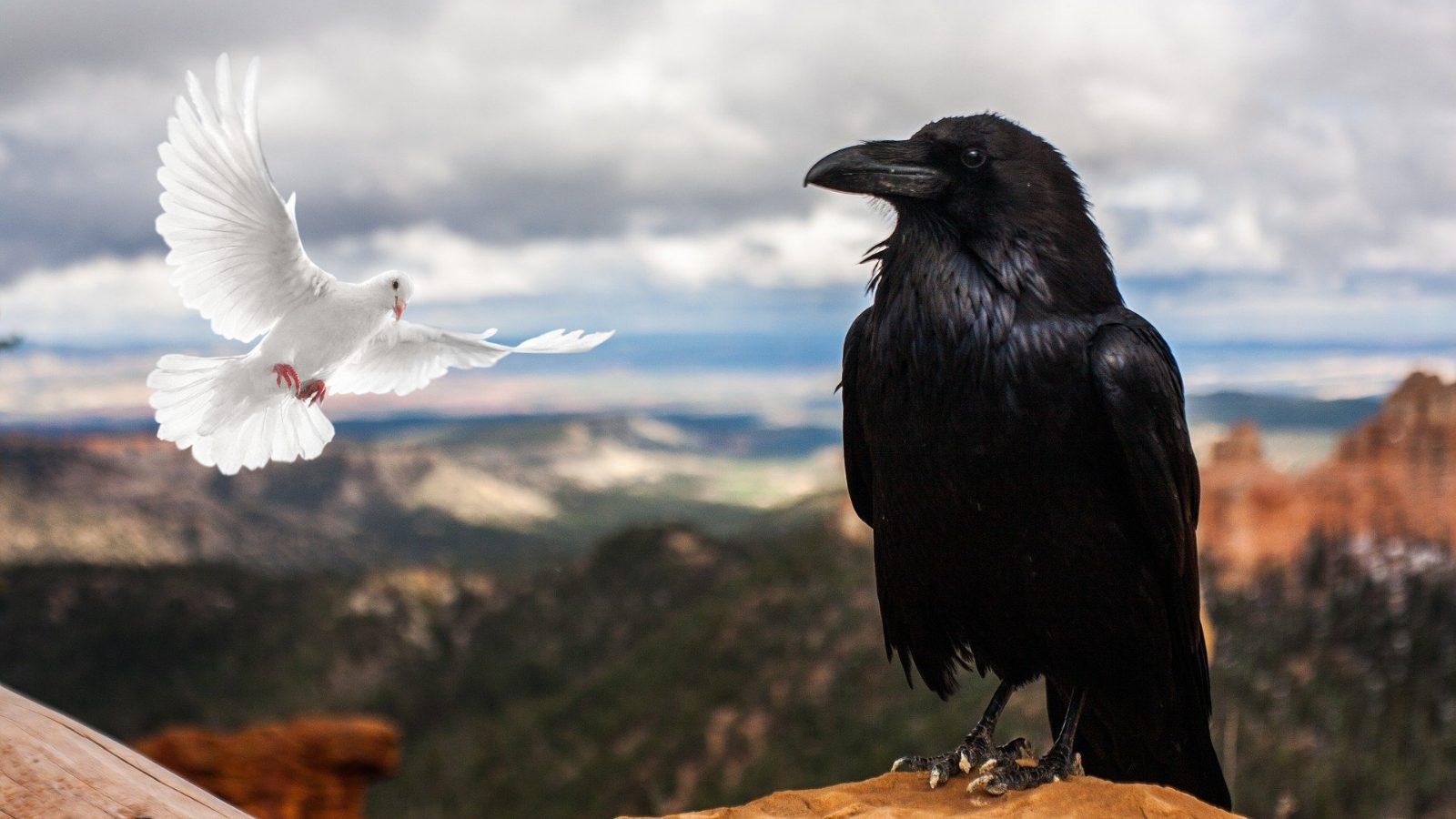 Cuervo y Paloma Blanca